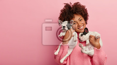 Fototapeta Happy female pet lover poses with two pedigree dogs, tilts head, has curly hair, wears pink sweater, isolated over rosy background, free space for your advertising. Friendship, people, animals concept
