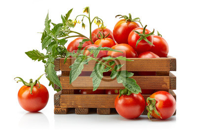 Fototapeta Harvest tomatoes in wooden box with green leaves and flowers. Vegetable still-life Isolated on white background.