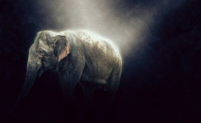 Fototapeta HDR zdjęcie słonia