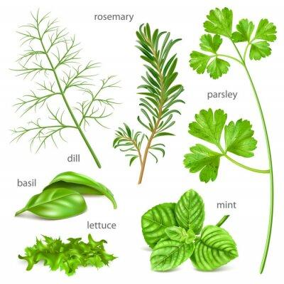 Fototapeta Herbs collection.