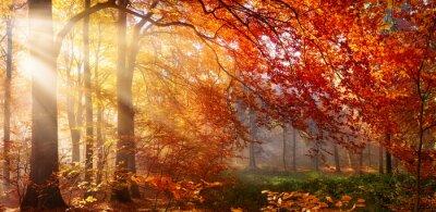 Fototapeta Herbst im Wald, mit Lichtstrahlen im Nebel und Rotem Laub