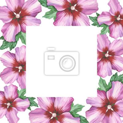 Hibiskus róża kwiat ramki tła w akwareli rysunku. Kwiatowy element projektu tła, plakat, drukuj, romantyczny zaproszenia, dekoracje, podobieństw lub wzoru.
