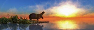 Fototapeta hippopotamus in the wild