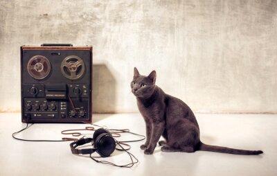 Fototapeta hipster z kotów domowych magnetofon i słuchawki