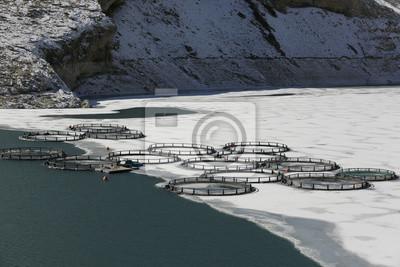 Hodowli ryb w zamarzniętym jeziorze, Anatolii Wschodniej