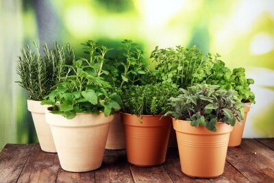 Fototapeta Homegrown and aromatic herbs in old clay pots on rustic background