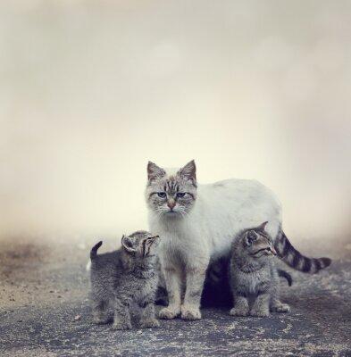 Fototapeta Homeless Kittens And Their Mother