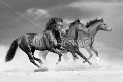 Fototapeta Horse herd run in dust