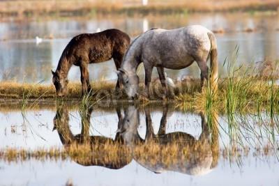 Fototapeta horses 3
