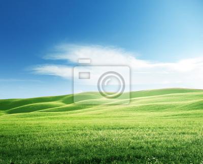 idealne pole trawy wiosną