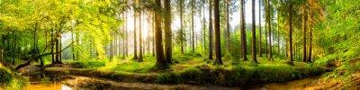 Fototapeta Idylliczne lasu z potoku o świcie