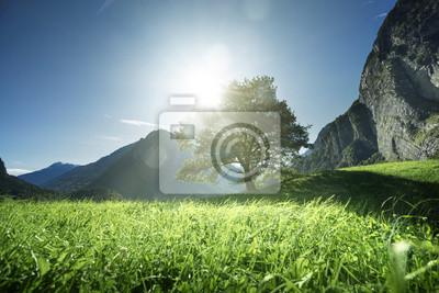 Fototapeta Idylliczny krajobraz w Alpach, drzewo, trawa i góry, Szwajcaria