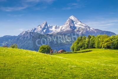 Fototapeta Idylliczny krajobraz w Alpach ze świeżych zielonych łąk i kwitnących kwiatów i ośnieżone szczyty górskie w tle, Nationalpark Berchtesgadener, Bawaria, Niemcy