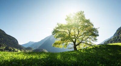 Fototapeta Idylliczny krajobraz w Alps, drzewie, trawie i górach, Szwajcaria