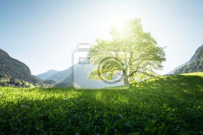 Idylliczny krajobraz w Alps, drzewie, trawie i górach, Szwajcaria