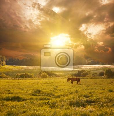 idylliczny krajobraz z konia w słońcu