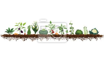 Fototapeta Ilustracja duży ogród warzywny