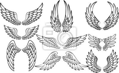 Fototapeta Ilustracja zestaw kolekcja skrzydeł