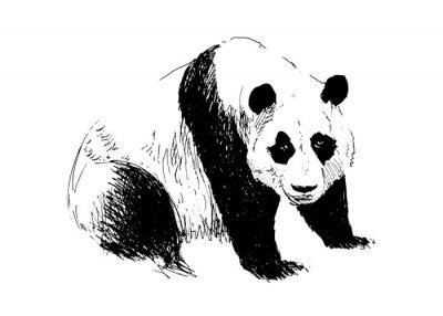 Fototapeta Ilustracji wektorowych