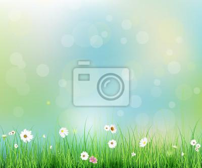 77c76a818db461 Fototapeta ilustracji wektorowych Wiosną charakter pole z zielona trawa,  białe Gerbera- Daisy kwiaty na