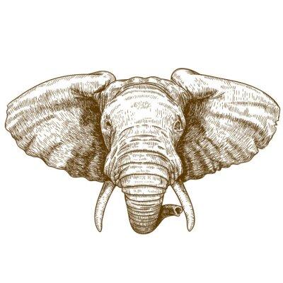 Fototapeta ilustracji wektorowych z głową słonia grawerowanie