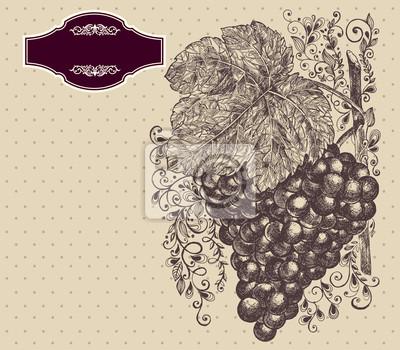 Fototapeta Ilustracji wektorowych z winogron