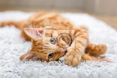 Fototapeta Imbirowy kotek z zabawką
