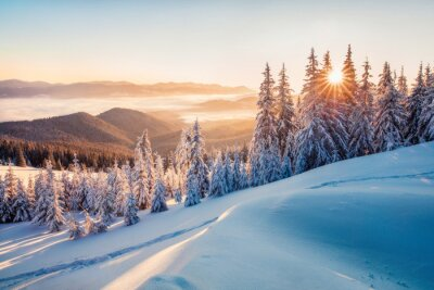Fototapeta Impressive winter morning in Carpathian mountains with snow covered fir trees. Colorful outdoor scene, Happy New Year celebration concept. Artistic style post processed photo.