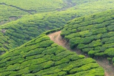 Fototapeta Indie, Kerala
