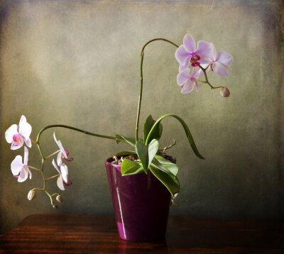 Fototapeta Interior still life,Phalaenopsis orchid with bloomy spikes on grunge texture