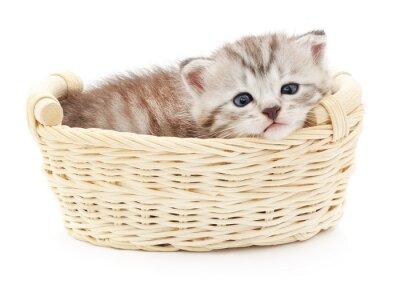 Fototapeta Isolated Kitten in Basket