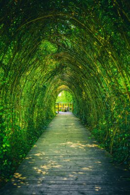 Fototapeta Ivy covered rack becomes a beautiful tunnel