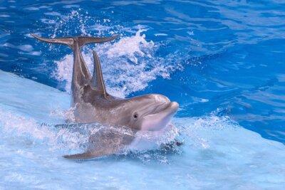 Fototapeta izolowane delfin pływanie podczas surfowania na morze świata