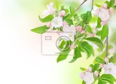 Jabłko wiosennych kwiatów. Projekt Blossom