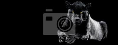 Fototapeta Jaguar with a black background