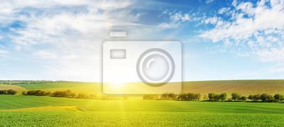 Fototapeta Jaskrawy świt nad kukurydzanym polem.