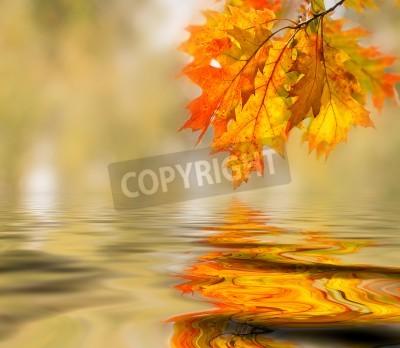 Fototapeta Jasne kolorowe liście na gałęzi w lesie jesienią.