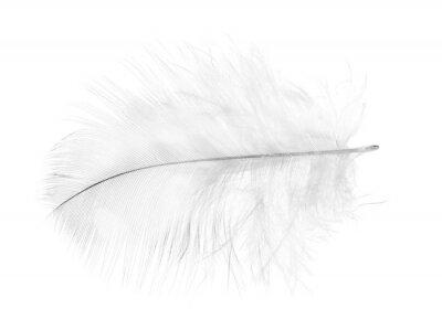 Fototapeta jasnoszary pióro na białym tle