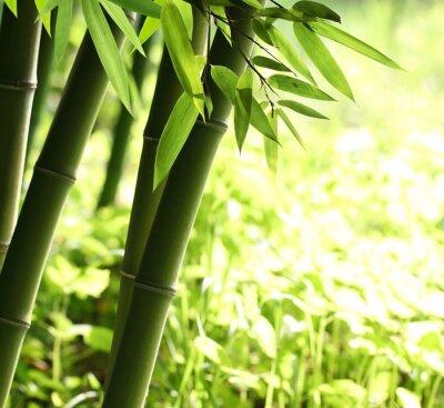 Jasny zielony las bambusowy