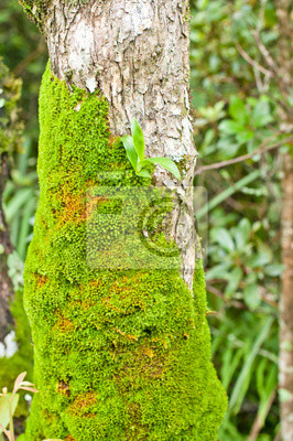 Jasny zielony mech na drzewie