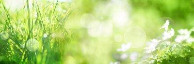 Fototapeta Jasny zielony wiosennych panoram