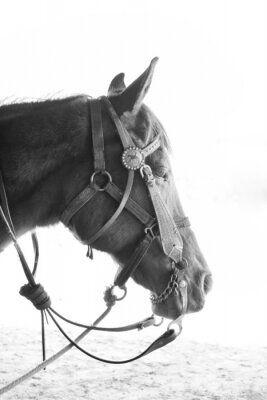 Fototapeta Jazda w czerni i bieli