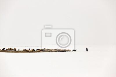 Jeden pasterz zasila stado owiec w mglisty i śnieżnej w zimie środowiska