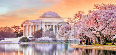 Fototapeta Jefferson Memorial podczas festiwalu Cherry Blossom