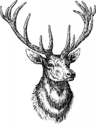 Fototapeta jeleń