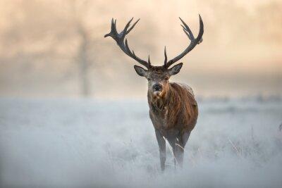 Fototapeta Jeleń w zimie