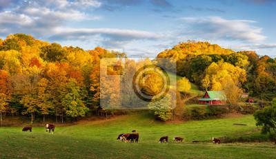 Fototapeta Jesień Appalachian farm na koniec dnia - krowy na tylnych drogach w pobliżu Boone w Północnej Karolinie