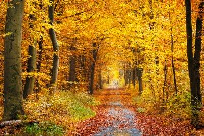 Fototapeta Jesień las