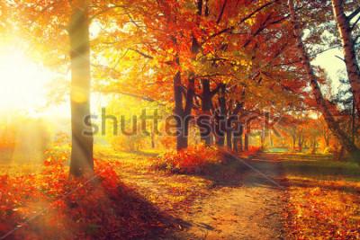 Fototapeta Jesień. Spadek. Park Jesienny. Jesienne drzewa i liście w promieniach słońca. Jesienna scena