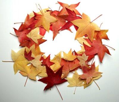 Jesień Tło Dziękczynienia